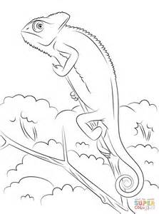 chameleon coloring page veiled chameleon coloring page free printable coloring pages