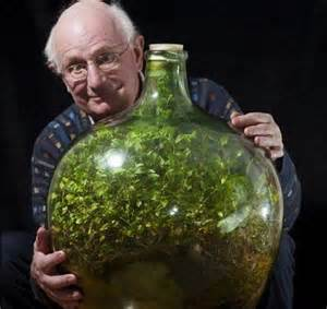 50 year old record busting bottled terrarium and it s not from dubai green prophet