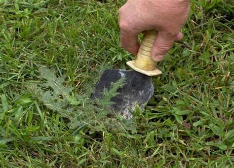 how to cut weeds in backyard 15 common lawn and garden weeds guide to weed