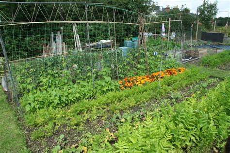 free with pictures home www otterbourne allotment association org
