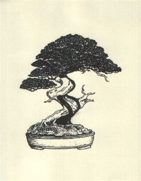 66 best images about bonsai drawing on bonsai trees tree drawings and dibujo the art of bonsai project feature gallery the illustrations of bob eskeitz
