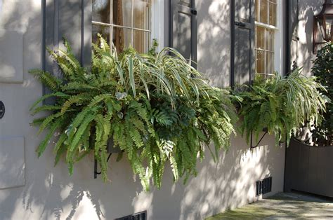winter plants for window boxes bwisegardening day 98 who needs flowers