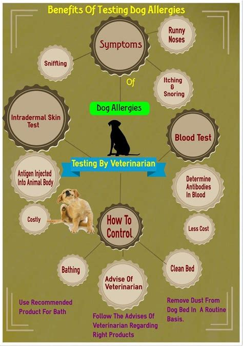 best food for skin allergies 2015 image gallery human allergy treatment