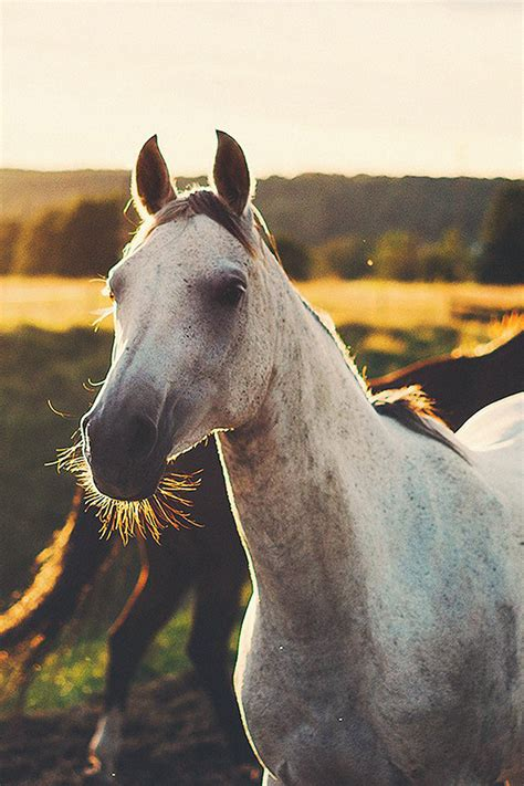wallpaper for iphone horse freeios7 all the wild horses parallax hd iphone ipad