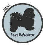 havanese breeders maine find the best havanese breeders with puppies for sale in all 50 states