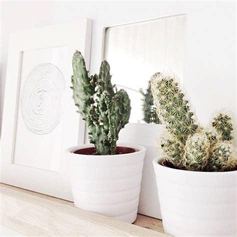 Kakteen Im Schlafzimmer by Die Besten 25 Kaktus Inneneinrichtung Ideen Auf
