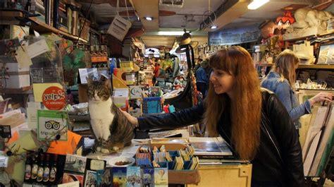 venezia libreria acqua alta i gatti della libreria acqua alta di venezia un gioiello