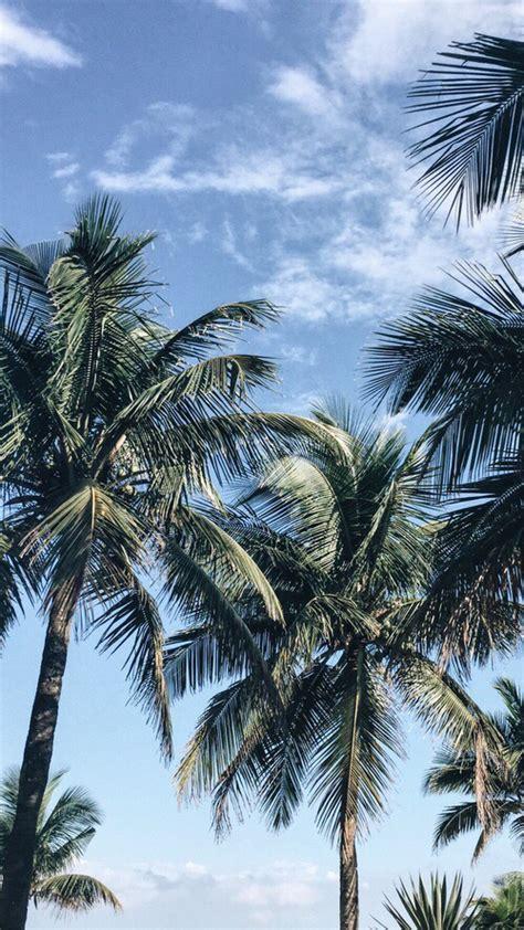 tree wallpaper pinterest palms iphone wallpaper iphone wallpapers pinterest