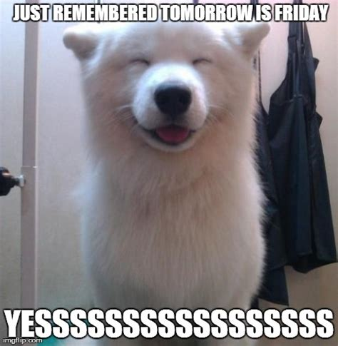 Tomorrow Is Friday Meme - image tagged in dogs animals cute smile imgflip
