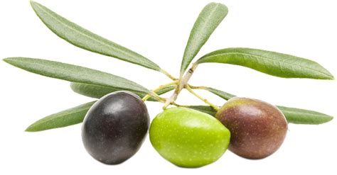 How To Make An Olive L by Olives