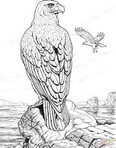 sea eagle coloring page ausmalbild adler auf einem fels ausmalbilder kostenlos