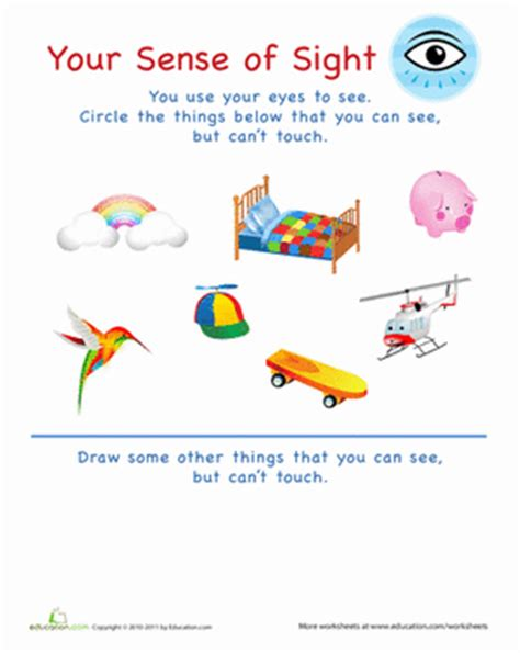 sense of sight | worksheet | education.com