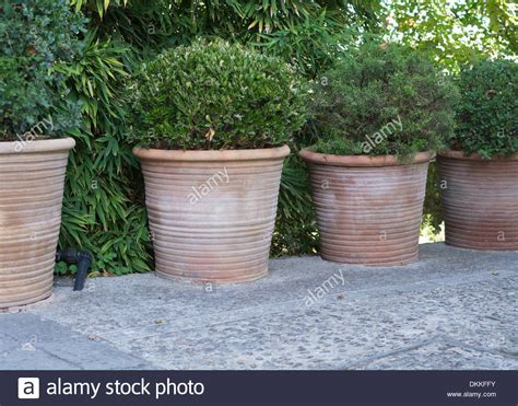 Large Terracotta Pots Four Large Terracotta Pots With Green Plants