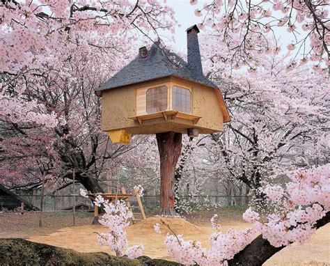 cherry tree house beautiful tree house in japan surrounded by cherry blossoms