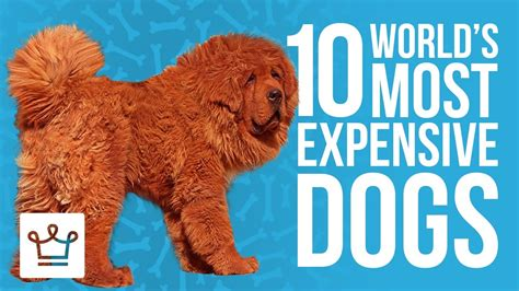 most expensive puppies warm weather destinations for december alux