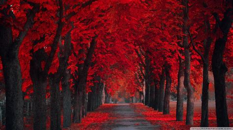 red wallpapers   beautiful backgrounds