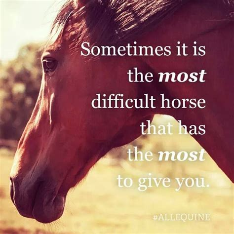 quotes about horses 66 best images about inspirational quotes on