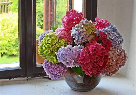 Hortensien Haltbar Machen hortensien haltbar machen 187 mit diesen methoden klappt s