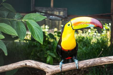 costa rica rescue toucan rescue ranch review our encounter with a sloth and other animals san