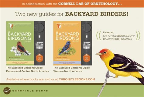 backyard birdsong guide backyard birdsong guide iowa backyard birds field guide