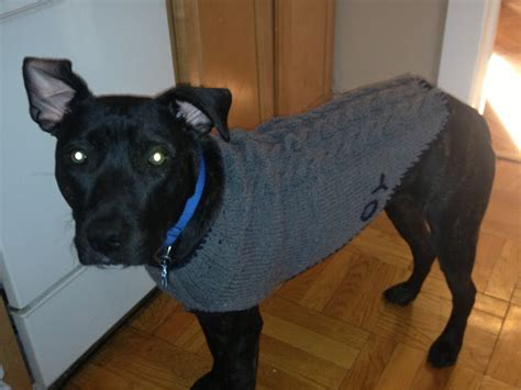 Sweater Pit Bull Imbong charm hour a pit bull sweater
