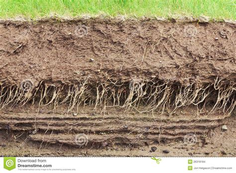 Soil Cross Section by Soil Cross Section Stock Images Image 26318184