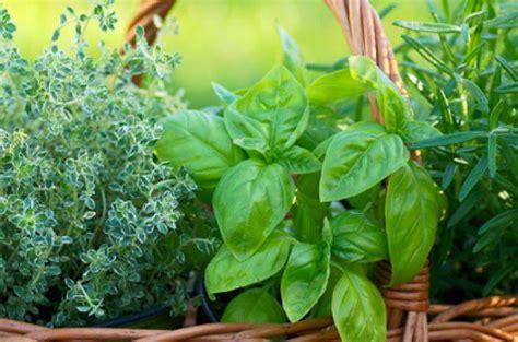 erbe aromatiche in casa coltivare piante aromatiche in casa idee per la casa