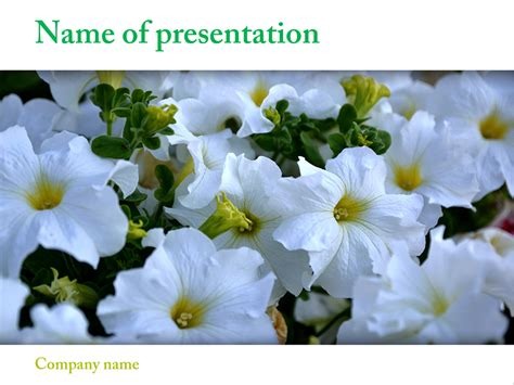 Beautiful Flowers Powerpoint Template For Impressive Presentation Free Download Flowers Powerpoint Template