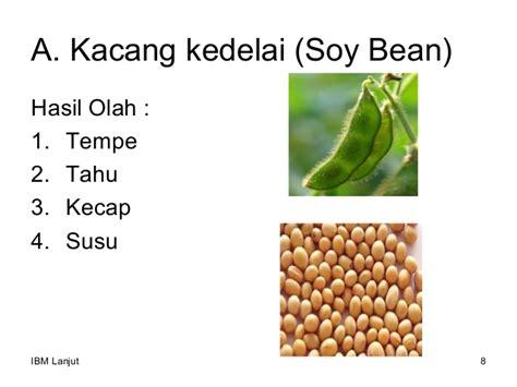 Kacang Kedelai 2 kacang kacangan