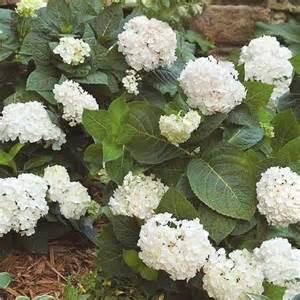 easy care flowering shrubs create an easy care shrub garden