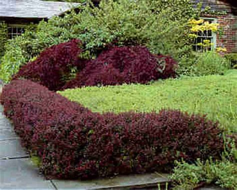 Bushes For Landscaping Fresh Plants For Landscaping Around House 16987