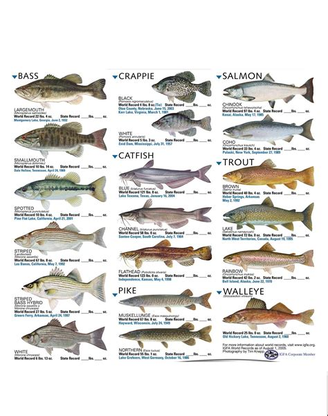 freshwater fish freshwater fish dec 31 2012 23 59 55 picture gallery