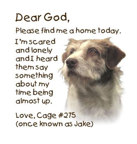 c bark doggie day c and pet lodge nc