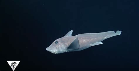baby shark ghost ghost shark pictures to pin on pinterest pinsdaddy