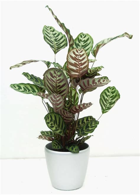 house plants no light plants that grow without sunlight 17 best plants to grow
