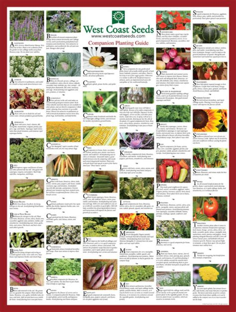 Companion Gardening by Companion Planting Chart For Gardening Vegetables