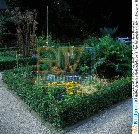 Homöopathie Bei Pflanzen 1703 by Details Zu 0003160368 Heilkr 228 Utergarten