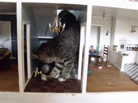 inside of a doll house photo of cat destroying dollhouse goes viral on reddit imgur abc news