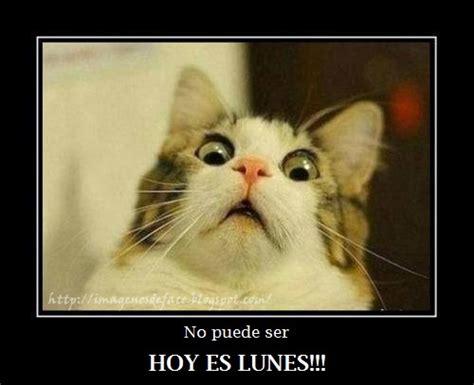 imagenes tiernas groseras gatos graciosos buscar con google funny pinterest