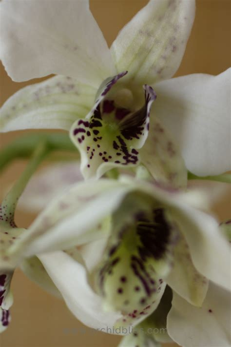 house happy house happy orchids will thrive in your home no greenhouse needed orchid bliss