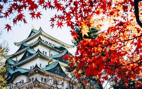 fly  japan     trip travel