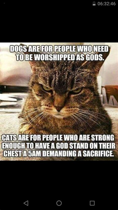 Mere Cat Meme - funny animal pictures cat memes just like cat funniest