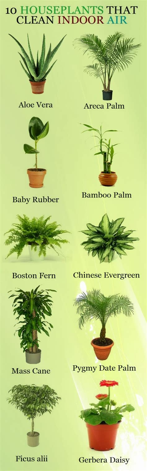 indoor plants to clean air garden and farms 10 houseplants that clean indoor air