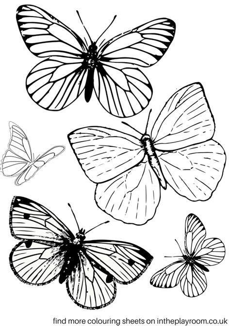 coloring pictures of small butterflies free printable butterfly colouring pages in the playroom