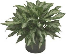 Low Light House Plants by Low Light Plants Indoor Plants Amp House Plants In Boston