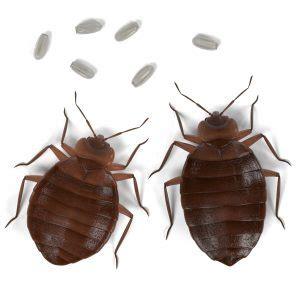 bed bug fumigation  arizona
