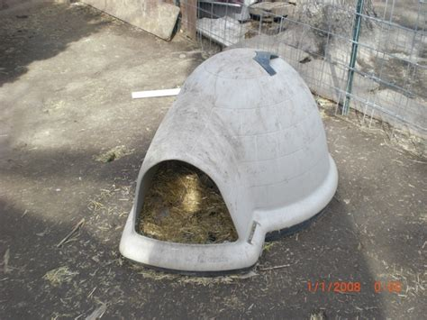 medium igloo dog house igloo dog house medium size nex tech classifieds