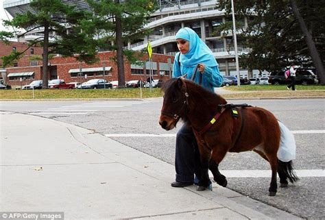 why do muslims dogs more muslim cruelty to animals muslims dogs so they are using miniature horses