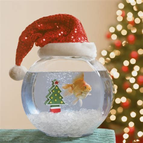 ways to decorate a santa hat how to decorate your aquarium for the holidays petslady