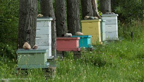ann arbor backyard beekeepers honey bees swarming call joel schaeffer of ona mission